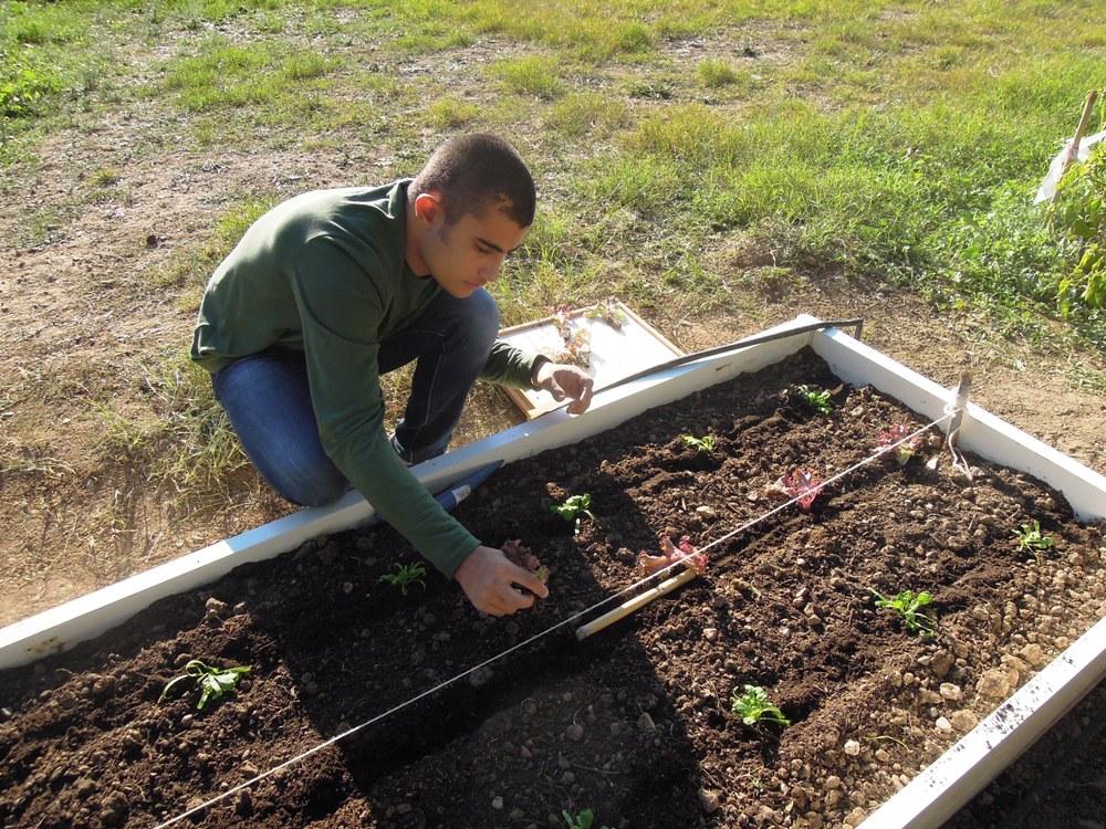 michele pianta la lattugaR